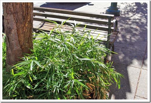 121028_SantaCruz_groundcover_bamboo