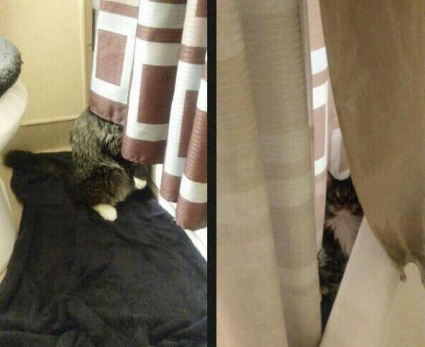 Os gatos não são muito bons em esconde-esconde 12