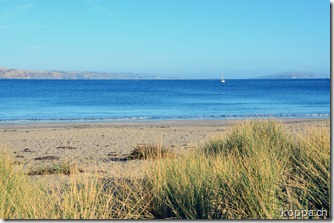 110917 Bodega Bay (1)
