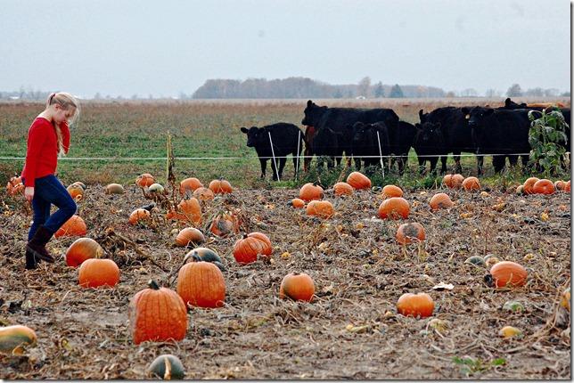 pumpkinpatchgracie