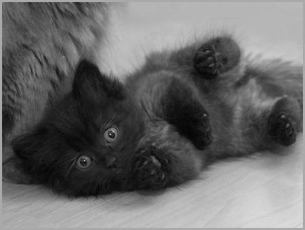 gatitos-6