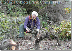 Frank is pruning 1 - Flickr- Intercambio de fotos
