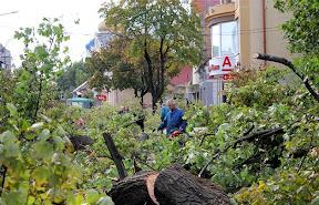 В Ужгороде на Швабской срежут все деревья 1.jpg