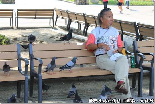 日本大阪城,還有日本民眾在這裡為鴿子,這裡的鴿子因為沒有人抓,所以完全不怕人類,只要有人吃東西,還會主動靠過來。