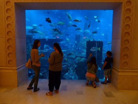 Obiective turistice Dubai: Atlantis Palm
