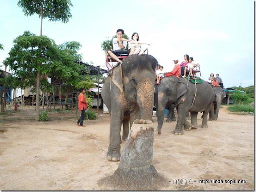 泰國芭達雅-騎大象6