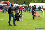 20100513-Bullmastiff-Clubmatch_30944.jpg