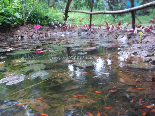 artificial pond and fish