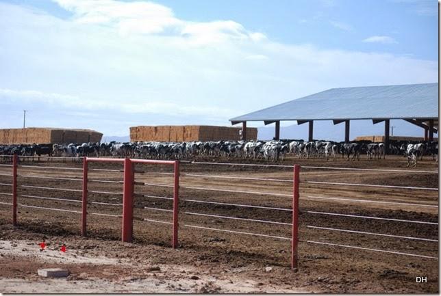 12-08-13 A Shamrock Farms Tour Stanfield (27)