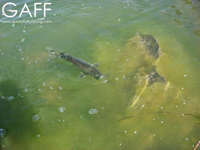 Largemouth-Yellowfish-Fly-Fishing (1).jpg