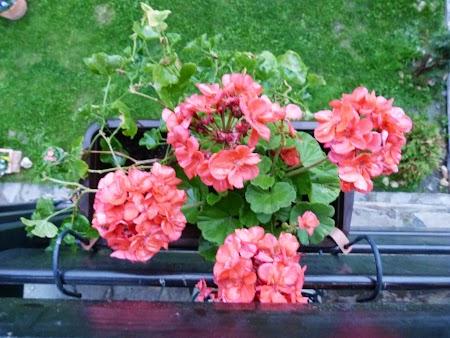 Casa Boiereasca Pestera Flori in ferestre