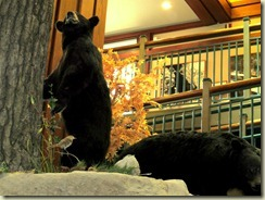 Interpretive Center Wildlife Displays