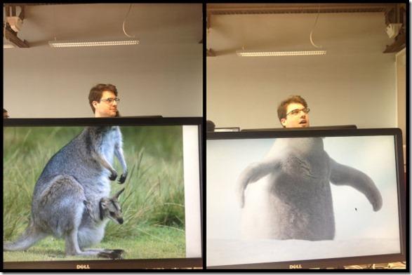photobomb-coworkers-animal-15