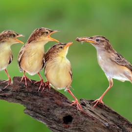 Yummy Lunch by MazLoy Husada - Animals Birds