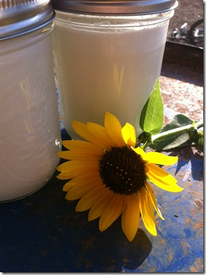 sunflower and milk