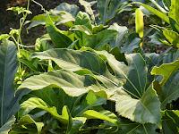 葉っぱの緑(CPLフィルタあり)