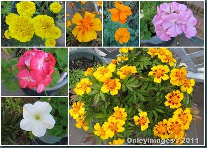 yard flowers2 1106