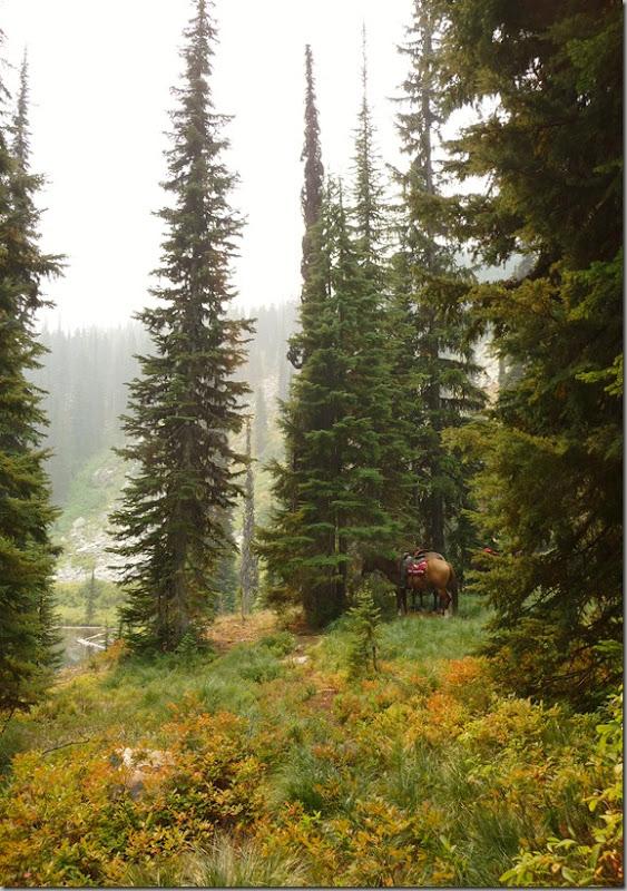 Horse trip 154