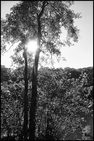 bw sun in tree 2