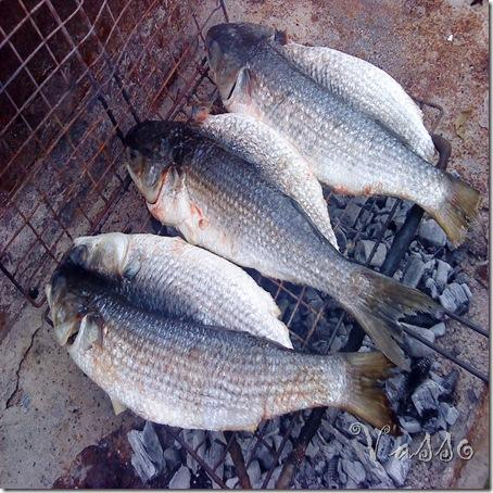 Ribe na rostilj5