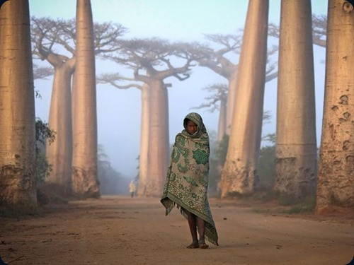 girl-baobabs-madagascar