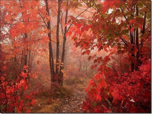 Lindas imagens de folhas do outono (31)