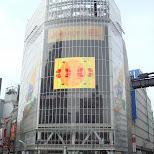 shibuya starbucks in Shibuya, Tokyo, Japan