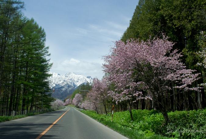 2013-05-25 Sakura 019