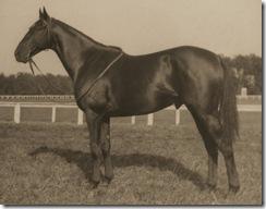battleship horse