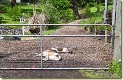 Dahlia & Maisie take a nap
