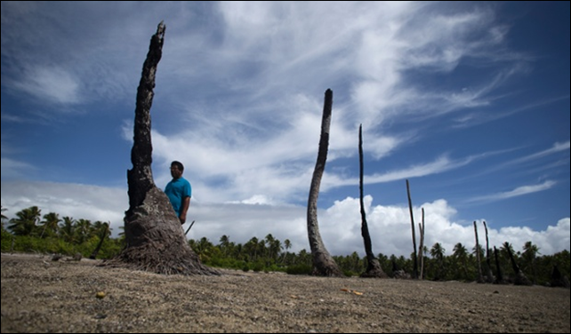 Local priest Father Martin Everi walks through what is left of the taro and banana fields in the village of Tebunginako, on Abaiang Island, Kiribati. Salinity from rising seal level has made the soil infertile and unable to be used. 'Nature cannot be stopped, I feel sorry for my people', he says. Photo: Mike Bowers