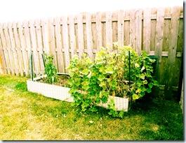 Garden 9-11-17