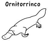 ornitorrinco.jpg