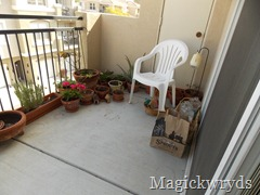 february garden blog 1