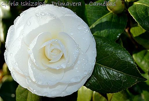 Glória Ishizaka - Primavera 2013 - 35