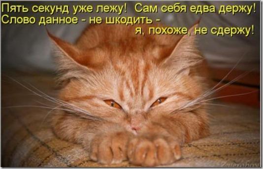 1361559344_novye-kotomatricy-2