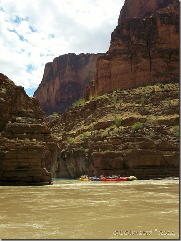 01 Boats tied at mouth of Havasu Creek Colorado River trip AZ (768x1024)