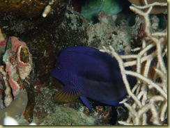 Fish Hiding 2