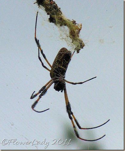 06-07-spider