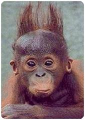seu penteado!
