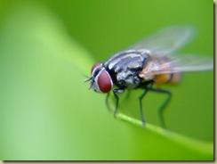 lalat11