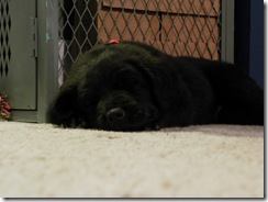 puppy training 03