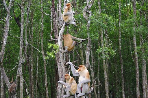 Chock full o'monkeys.