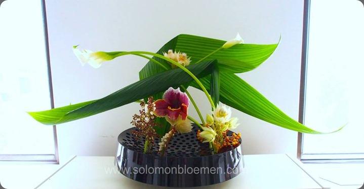 leaves 998630_10151824528771257_1443073608_n solomon bloemen