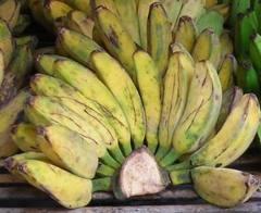 pisang nipah