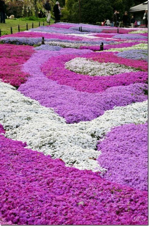 pink-park-japan-21