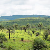 写真1 安定的なアブラヤシのランドスケープ / Photo1 Idyllic landscape of scattered oil palm trees.