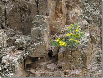 456 rock garden (640x480)