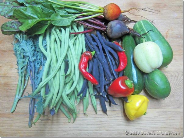 beans&cukes&squash