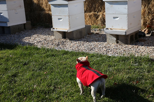 It's a fact that honeybees stop flying when the temperature drops in the winter - 55-degrees to be exact.